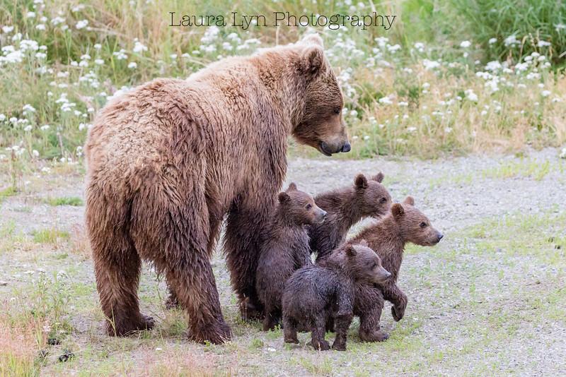 Proud Momma Bear