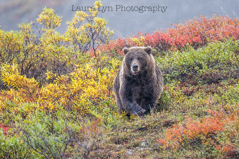 Taken in Denali National Park in August 2014