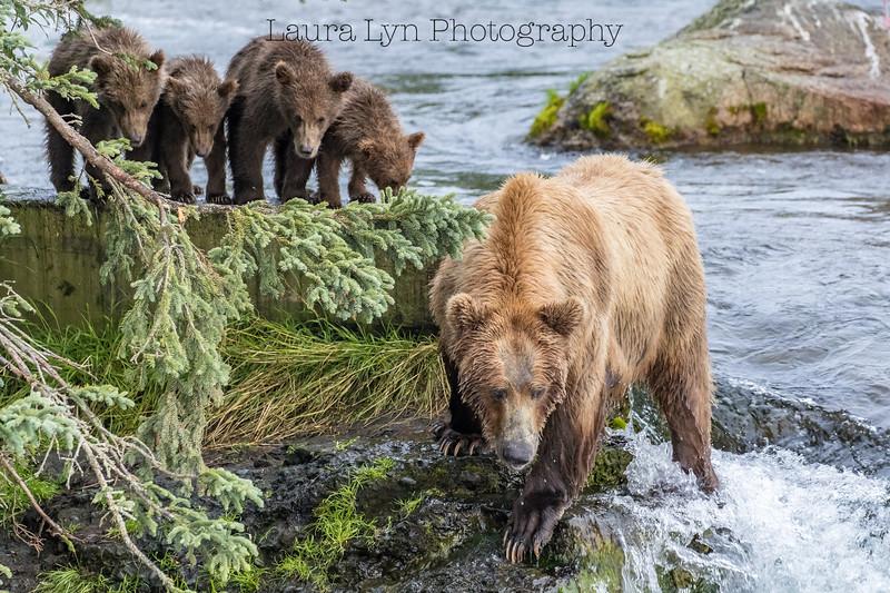 Katmai National Park Day Six August 2018 (83 of 87)