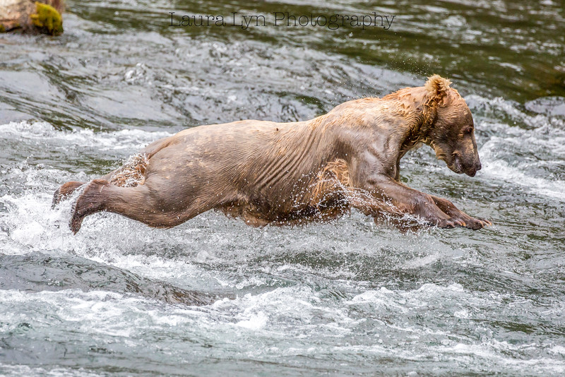 Belly Flop Bear