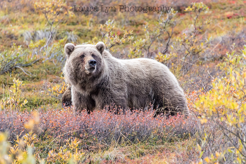 Taken in Denali National Park in August 2016