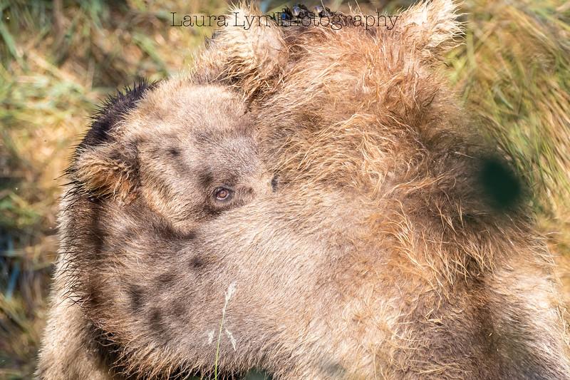 Katmai National Park Day Four August 2018 (11 of 53)