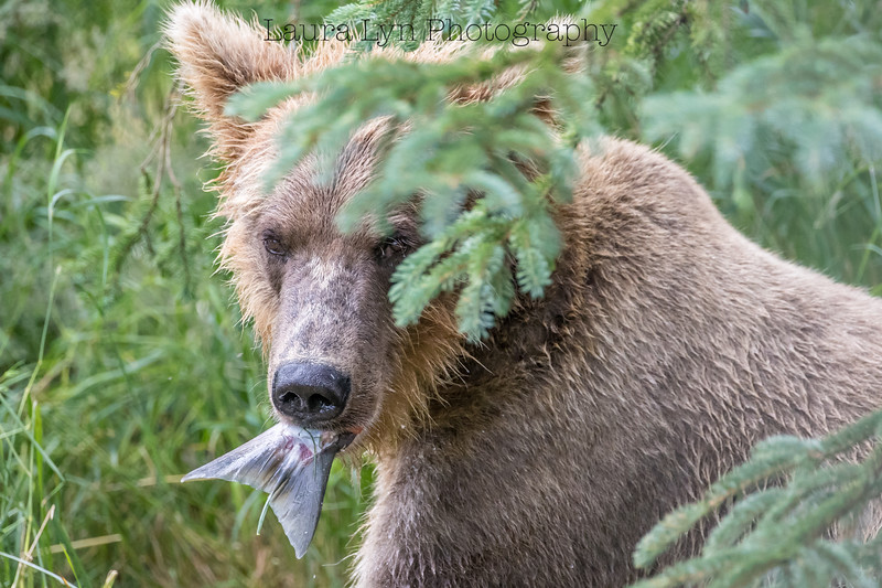Katmai National Park Day Four August 2018 (29 of 53)