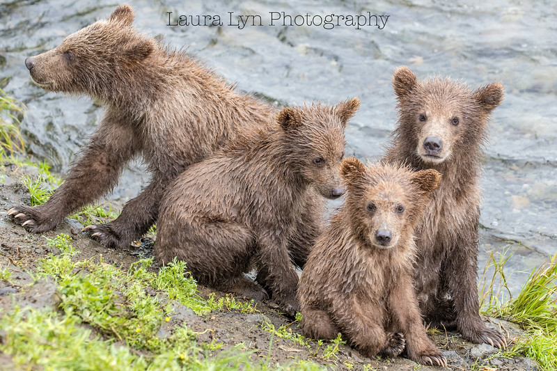 Katmai National Park Day Seven August 2018 (12 of 53)