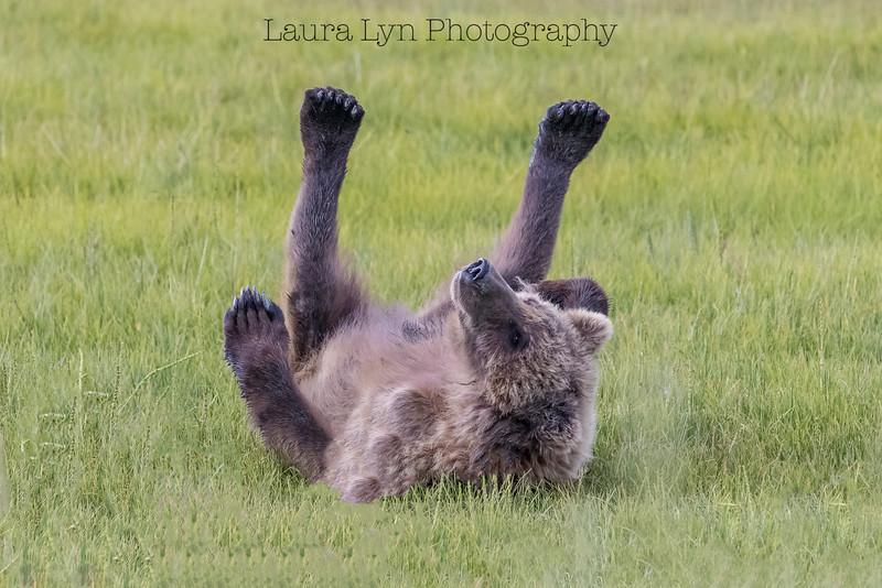 On a Roll Bear