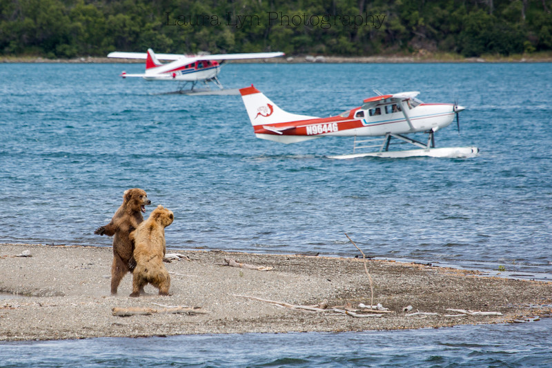 Bears & Planes