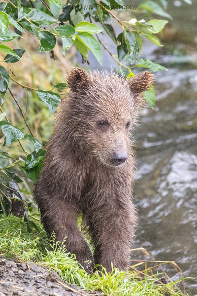 Katmai National Park Day Seven August 2018 (18 of 53)