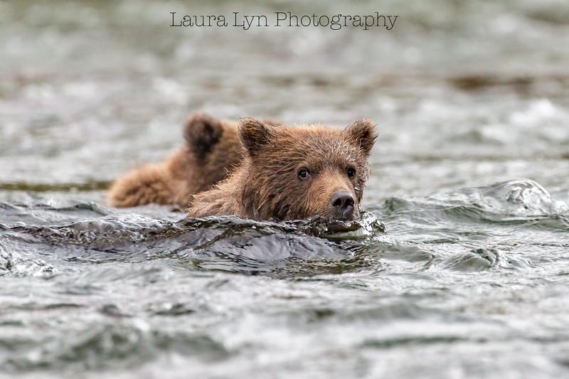 Drifting Cubs