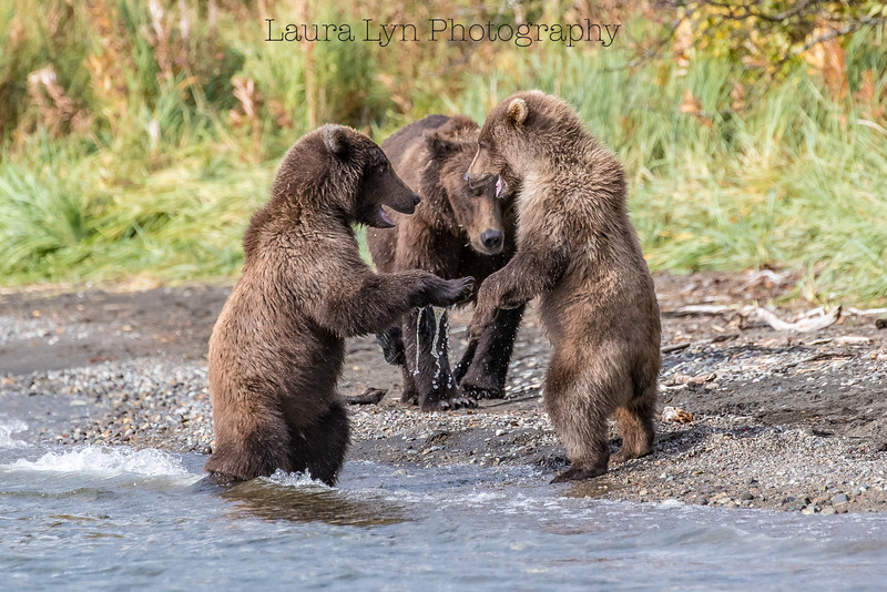 Taken in Katmai National Park in September 2016