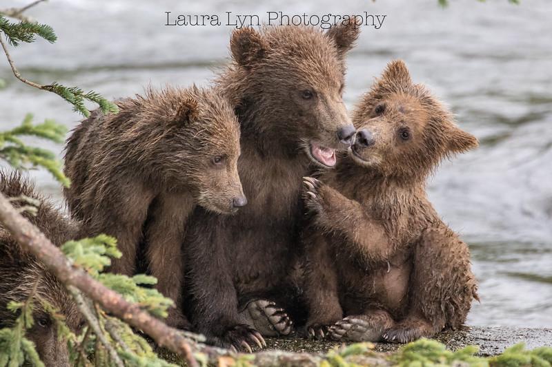 Katmai National Park Day Six August 2018 (76 of 87)