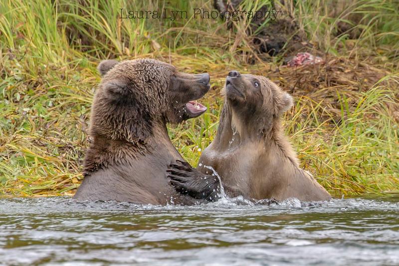 Your Breath Stinks Bear