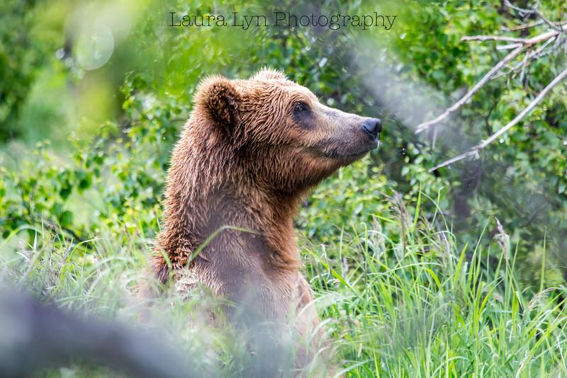Periscope Bear