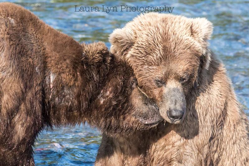 Nuzzling Bears