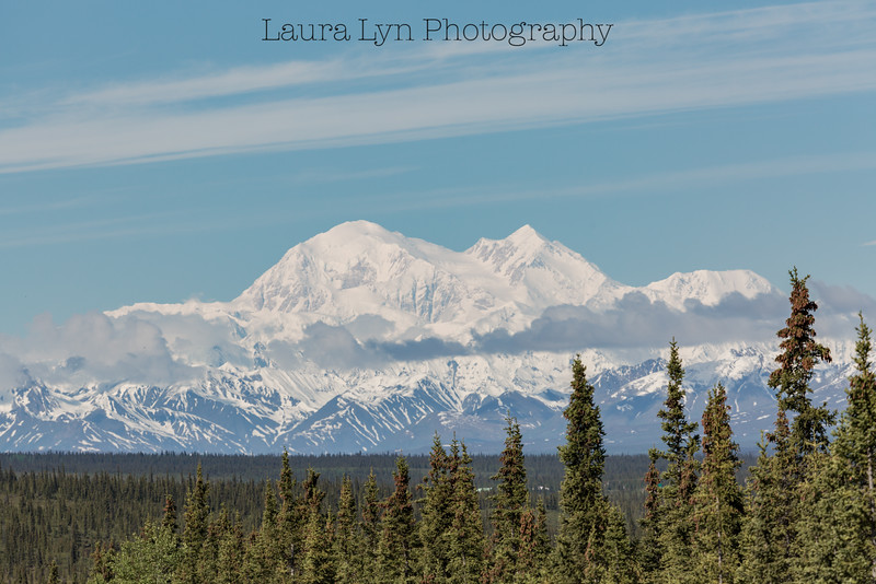 Taken in Denali National Park in June 2014.