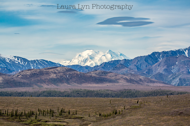 Taken in Denali National Park in May 2015.