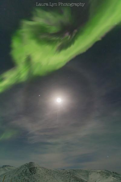Moondog Aurora