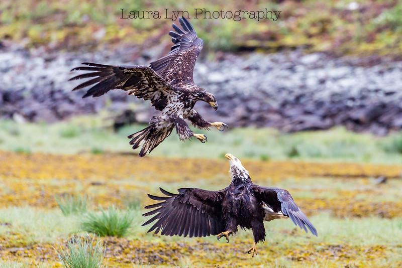 Duel Eagles