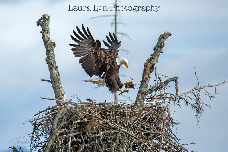 Daddy's Home Eagle