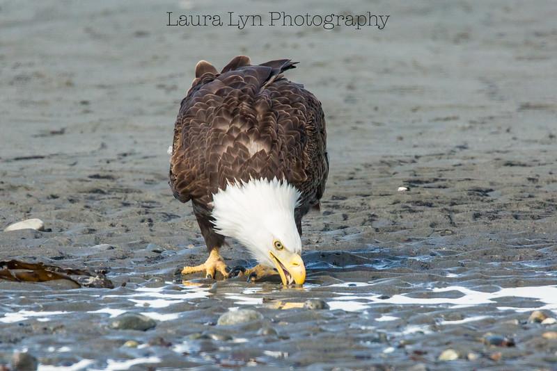 Eagle Drink