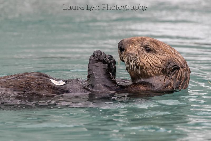 Otter (2 of 1)