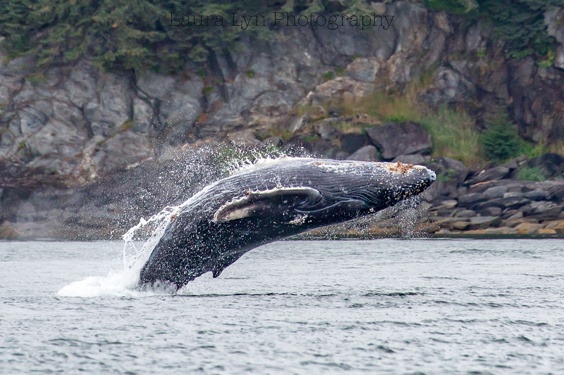 Whale Back Flip