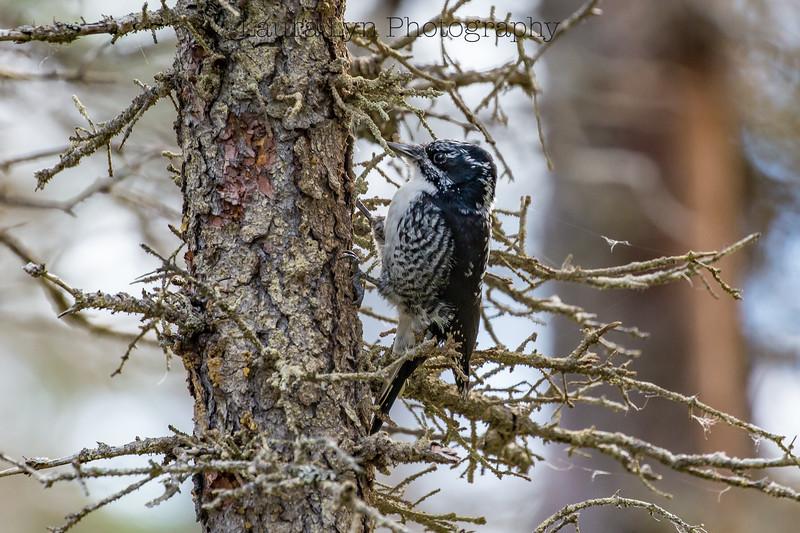 Taken in Katmai National Park in Fall 2015