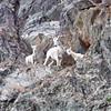 Sheep Overlook