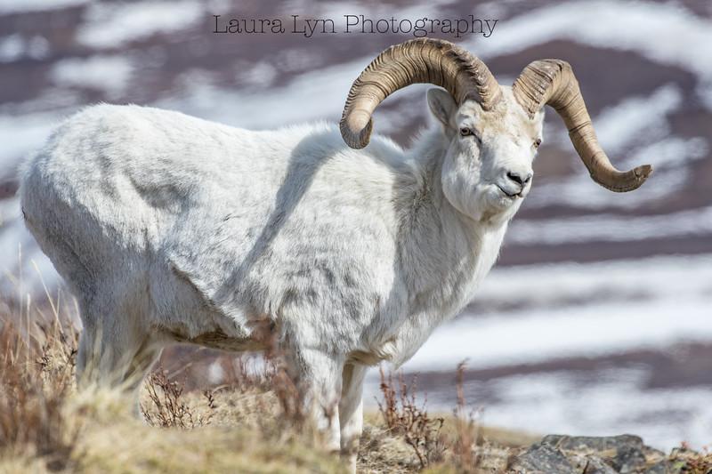 Denali National Park May 20 (14 of 63)