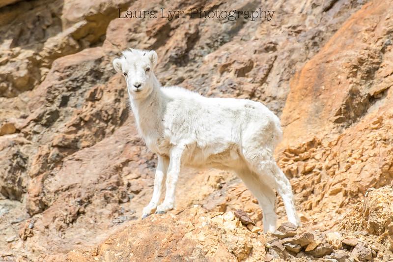 Denali National Park May 20 (5 of 63)