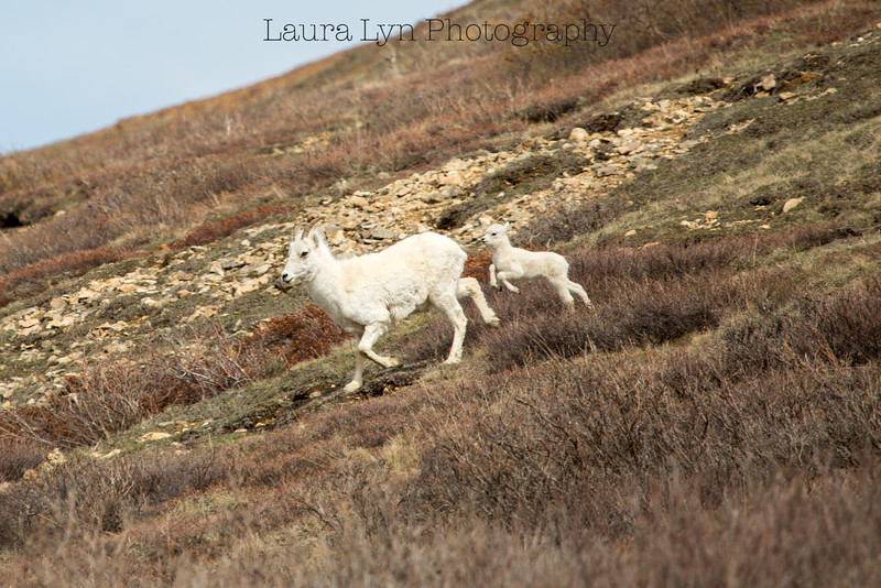 Taken in Denali National Park in May 2014