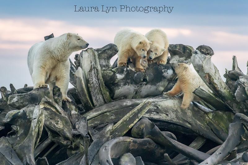 Bones and Bears