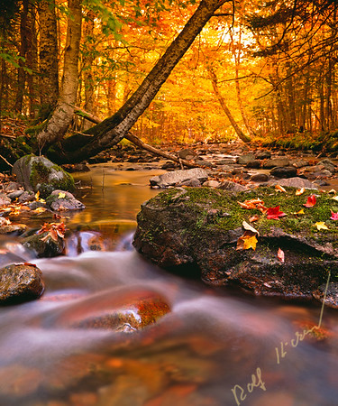 Fall colours at Cape Breton Highlands National Park, Macintosh Brook, Nova Scotia, Canada