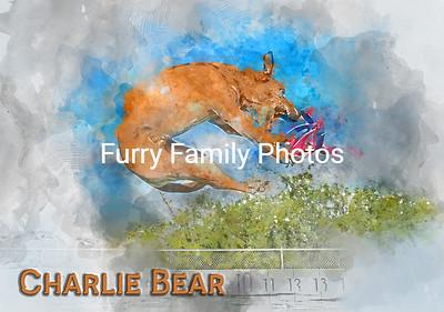Charlie Bear V3