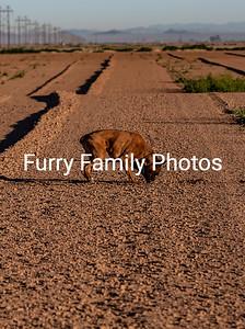 FFP_1476