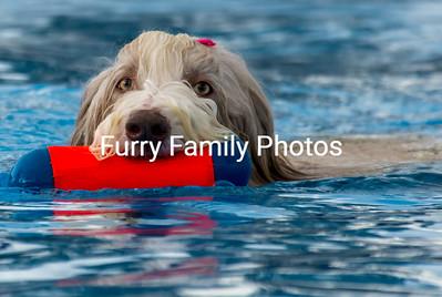 2016-Oct Hunter Canine NADD Trials