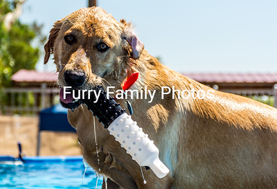 2016-Sept Hunter Canine NADD Trials