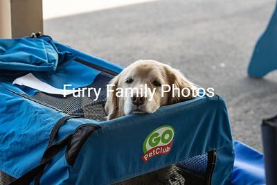 Superstition Kennel Club 2019