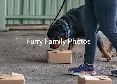 Finn-2