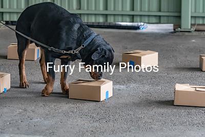Finn-5