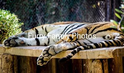 Arizona Zoo Animals