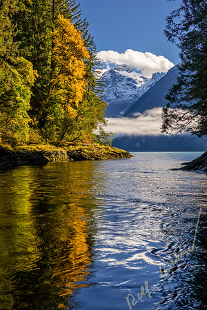 Autumn colors and fog in Knight Inlet, Glacier Bay, British Columbia, Canada.