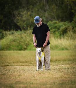 greyhound-23