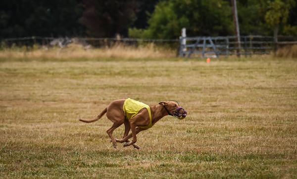 pharoahhound-22