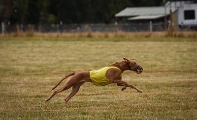 pharoahhound-25