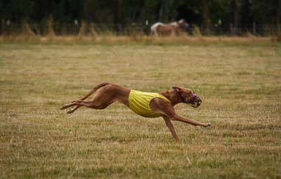 pharoahhound-23