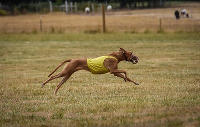 pharoahhound-27