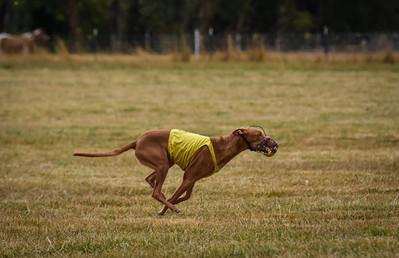 pharoahhound-24