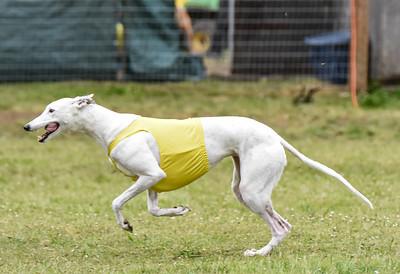 satfinalBoBgreyhound-2