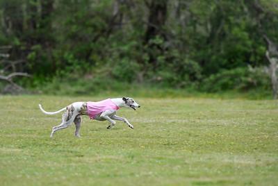 satfinalBoBgreyhound-12