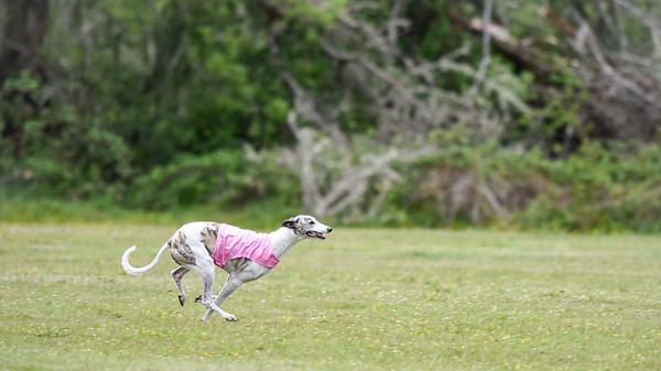 satfinalBoBgreyhound-13